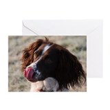 English springer spaniel Greeting Cards (Pk of 10)