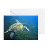 Tortuga marina Greeting Cards (Pk of 20)