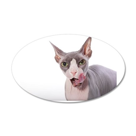 Sphynx Cat with tongue out 35x21 Oval Wall Decal