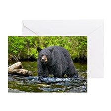Black cear Greeting Cards (Pk of 10)