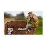 Dumpster diving monkey Wall Decal