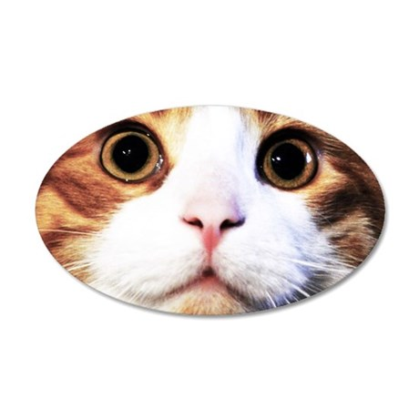 Close up of cat face 35x21 Oval Wall Decal