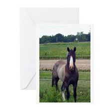 ZEUS Greeting Cards (Pk of 10)