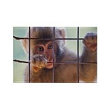 Japanese macaque climbing  wire w Rectangle Magnet