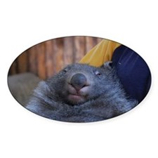 Wombat Decal