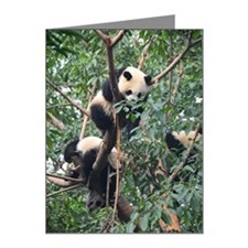Sleeping Pandas Note Cards (Pk of 10)