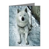 Ainu Dog on snow Note Cards (Pk of 10)