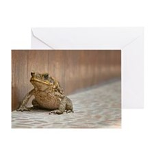 Frog on pavement Greeting Card