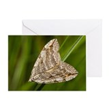 Poplar Hawk-moth Greeting Card