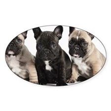 Pedigree French Bulldog Puppies in  Decal