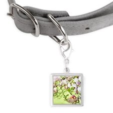 Easter Eggs Small Square Pet Tag