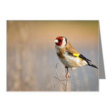 Goldfinch perching on season Note Cards (Pk of 10)