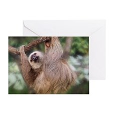 Three-toed sloth hanging in a tree Greeting Card