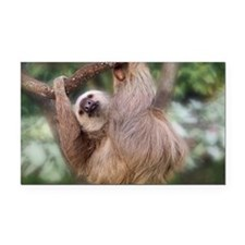 Three-toed sloth hanging in a Rectangle Car Magnet