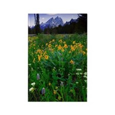 Wildflowers with mountains on bac Rectangle Magnet