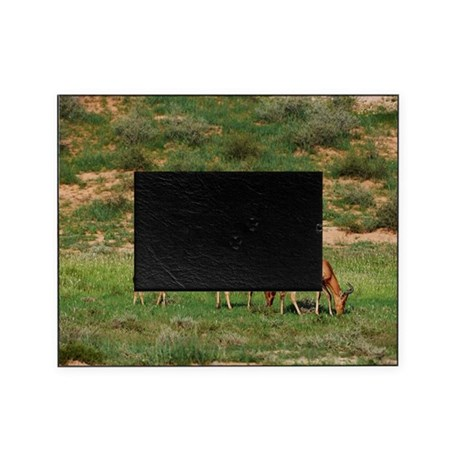 Red Hartebeest, Kgalagadi Transfront Picture Frame