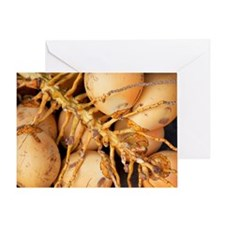 fresh young coconuts Greeting Card