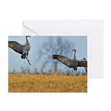 Sand hill crane Greeting Cards (Pk of 20)