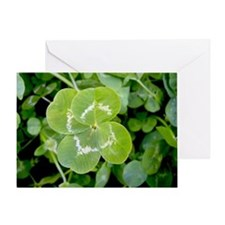 Four leaf clover in patch Greeting Card