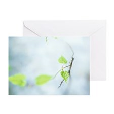 Vine Greeting Cards (Pk of 20)