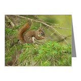 Red Squirrel, Ontario, Canad Note Cards (Pk of 10)
