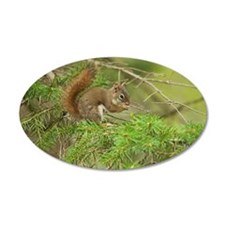 Red Squirrel, Ontario, Canad Wall Decal