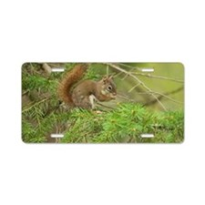Red Squirrel, Ontario, Cana Aluminum License Plate