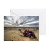 Camel sitting in desert Greeting Card