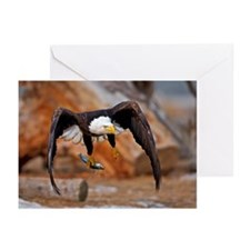 Bald eagle head in mid a Greeting Cards (Pk of 10)