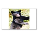 black bear cub Rectangle Decal