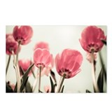 Tulip Postcards (Package of 8)