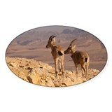 Two female Ibex on cliff in desert Decal