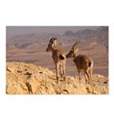 Two female Ibex on cliff  Postcards (Package of 8)