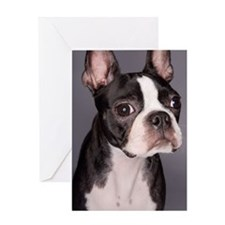 Portrait of Boston Terrier Greeting Card