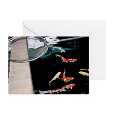 Koi Carps and Net Greeting Cards (Pk of 10)
