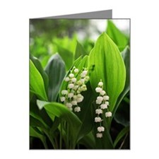 Lily of valley Note Cards (Pk of 10)