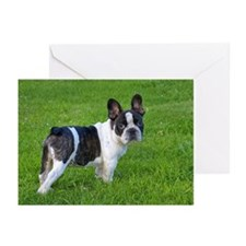 Portrait of French bulld Greeting Cards (Pk of 20)