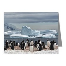 Penguin Note Cards (Pk of 20)