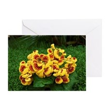 Lady's purse or Slipper flower, Calc Greeting Card