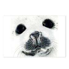 Harp Seal 3 Postcards (Package of 8)