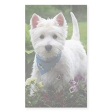 Westie puppy in garden Decal