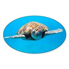 Close up of sea turtle in Car Decal