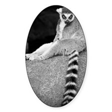 Lemur Decal
