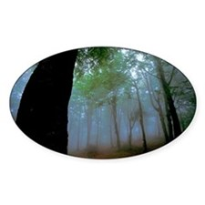Mist in woods, Liguria, Savon Decal