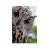 Eurasian Eagle Owl Rectangle Magnet