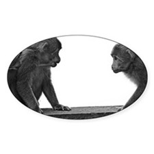 Monkeys getting ready for fig Decal