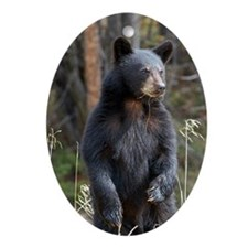 Standing Black Bear Cub Ornament (Oval)