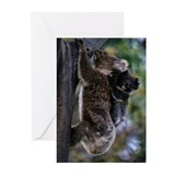 Koala (Phascolarctos cin Greeting Cards (Pk of 10)