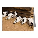 Cattle skulls lying on the g Note Cards (Pk of 10)