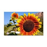 Sunflower Car Magnet 20 x 12